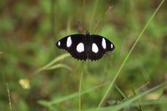 Makro av en fjäril som fördjupa dess vingar royaltyfri fotografi