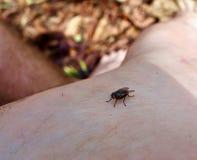 Makro av en fluga på en fot för person` s Royaltyfri Bild