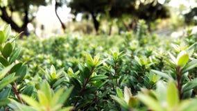 Makro av en grupp av växter Royaltyfri Foto