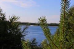 Makro av en julgran på bakgrunden av en sjö Arkivfoto