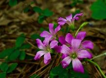 Makro av en klunga av purpurfärgade blommor Arkivbilder