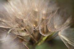 Makro av en lös blomma Arkivbild