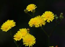 Makro av en lös blomma Royaltyfria Bilder