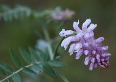 Makro av en lös blomma Arkivfoton