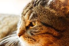 Makro av en manlig katt royaltyfri foto