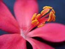 Makro av en röd blomma arkivbild