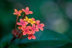 Makro av enkla blommor Royaltyfri Foto