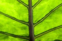 Makro av ett blad av en växt arkivfoto