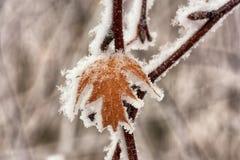Makro av ett djupfryst blad arkivfoton
