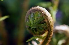 Makro av gröna ormbunkesidor i en botanisk trädgård arkivfoto