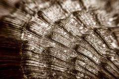 Makro av havsskaltextur arkivfoto