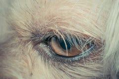 Makro av hundögat royaltyfri bild