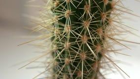 Makro av kaktuns med grova spikar stock video