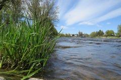 Makro av kanten av en flod Arkivfoton