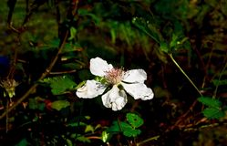 Makro av litet växa för vit blomma bredvid ett damm Arkivbild