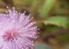 Makro av rosa färgblomman fotografering för bildbyråer