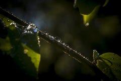 Makro av små droppar av dagg Royaltyfria Foton