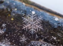 Makro av snöflingor som frysas i is fotografering för bildbyråer