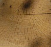 Makro av trästubbekorn Royaltyfria Foton