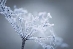 Makro av växten med rimfrost royaltyfri foto