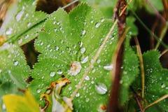 Makro av waterdrops på en tjänstledighet Fotografering för Bildbyråer