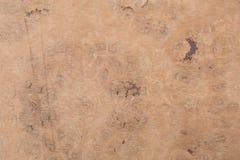 Makro av Wood fanér Arkivfoto