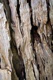 Makro- barkentyna drzewa oliwne tworzy abstrakcjonistycznego skutek tex Obraz Stock