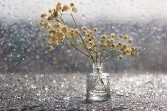 Makro- biali kwiaty z zamazanym bokeh w spokojnym życiu obraz royalty free