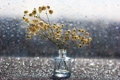 Makro- biali kwiaty z zamazanym bokeh w spokojnym życiu obraz stock