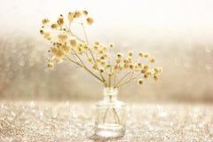 Makro- biali kwiaty z zamazanym bokeh w spokojnym życiu zdjęcia royalty free