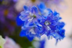 Makro Blommor royaltyfria bilder