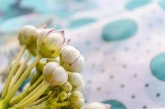 Makro- calotropis trojeści dziki kwiat  Fotografia Stock