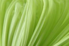 Makro chrysanthemum Stock Photos