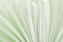 Makro chrysanthemum Stock Photos