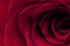 makro- czerwieni różany strzał Zdjęcia Stock