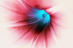 Makro der blauen Blume stockfoto