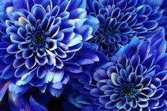 Makro der blauen Blumenaster Stockbild