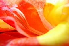 Makro der Gladioleblume stockbilder