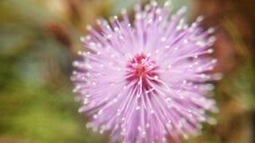 Makro der rosa Blume stockbilder
