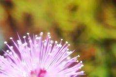 Makro der rosa Blume stockfoto
