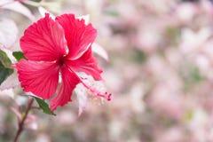 Makro der süßen Blume Schließen Sie herauf weiße Blumen auf Natur stockbild