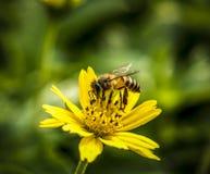 Makro der wirklichen Naturblume botanisch stockfotos