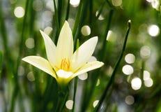 Makro der wirklichen Naturblume botanisch lizenzfreies stockfoto