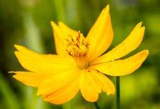Makro der wirklichen Naturblume botanisch stockfoto