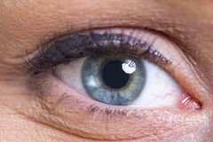 Makro des blauen Auges Stockbilder