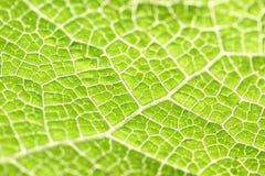 Makro des grünen Blattes Lizenzfreie Stockbilder