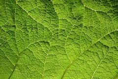 Makro des grünen Blattes Stockbilder