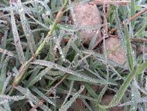 Makro des jungen Grases mit Tauwasser fällt auf Ackerland Lizenzfreie Stockfotos