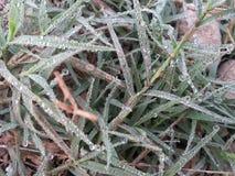 Makro des jungen Grases mit Tauwasser fällt auf Ackerland Stockfotos