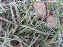 Makro des jungen Grases mit Tauwasser fällt auf Ackerland Lizenzfreie Stockbilder